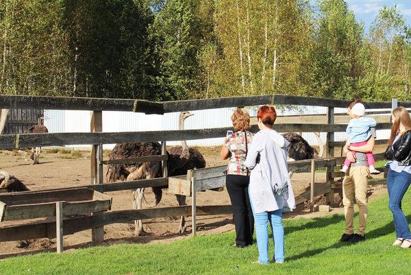 Страусиная ферма в Макарьево